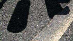在地面录影的移动的树荫 影视素材