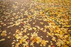 在地面的下落的秋叶在早晨 库存图片