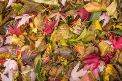 在地面的五颜六色的红色,黄色和橙色秋叶样式 库存图片