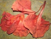在地面的叶子花 库存照片