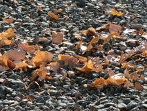 在地面的叶子 免版税库存图片