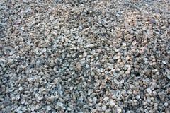 在地面的壳堆 免版税库存照片