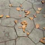 在地面的干燥叶子 免版税图库摄影