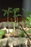 在地面的幼木 免版税图库摄影