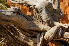 在地面的扭转的树 免版税库存图片