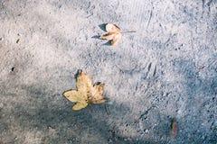 在地面的枫叶秋天在秋天期间在汉城,韩国 库存图片