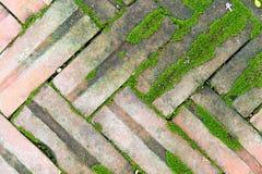 在地面的砖包含一些青苔 库存图片