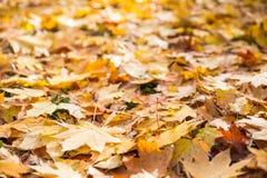 在地面的秋叶纹理 免版税库存照片