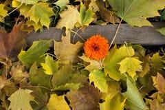 在地面的秋天叶子与花。 免版税库存图片