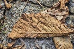 在地面的秋天叶子 库存图片