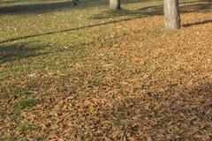 在地面的秋天叶子 免版税库存照片