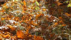 在地面的秋天黄色下落的叶子在森林里 股票录像
