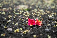 在地面的红色花 免版税图库摄影