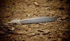 在地面的羽毛 免版税库存照片