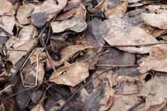 在地面的老叶子 免版税库存图片