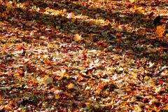 在地面的色的明亮的秋叶在早晨森林里 库存图片