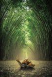 在地面的蜗牛 道路由双方侧了没有竹森林背景 免版税库存图片