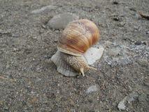 在地面的蜗牛 免版税库存照片