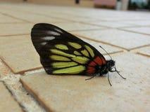 在地面的蝴蝶休息 库存照片