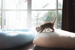 在地面的逗人喜爱的小猫 免版税库存图片