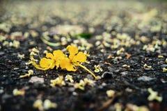 在地面的黄色花 库存照片