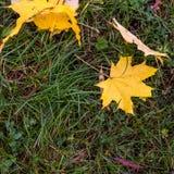 在地面秋天背景的五颜六色的秋叶 图库摄影