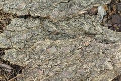 在地面纹理的树皮 库存图片