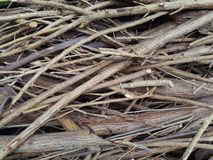 在地面背景的布朗干燥枝杈 库存图片