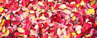 在地面背景,全景背景秋天的五颜六色的秋季叶子 免版税库存图片