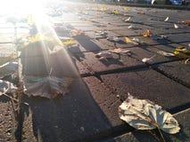 在地面附近的太阳在与被投下的叶子的路面下 城市太阳上升 库存照片