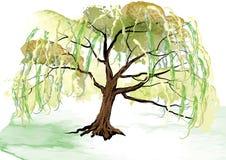 在地面风景设计的柳树,用刷子创造的水彩看起来 免版税库存照片