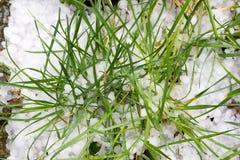 在地面,损坏的草上的冰雹石头 免版税库存图片