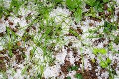 在地面,损坏的草上的冰雹石头 免版税图库摄影