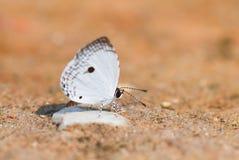 在地面,自然的蝴蝶 免版税库存照片