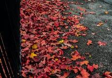 在地面,证明上的叶子秋天结束 库存图片