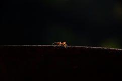 在地面2上的蚂蚁 图库摄影