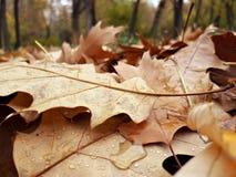 在地面-在秋天期间的森林上的五颜六色的叶子 免版税库存照片