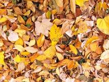 在地面-在秋季期间的森林上的五颜六色的叶子 免版税库存照片