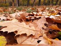 在地面-森林上的五颜六色的叶子 库存图片