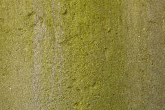 在地面水泥的自然绿色青苔 图库摄影