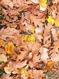 在地面-秋天上的五颜六色的叶子在森林里 库存图片