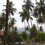 在场面的椰子 免版税库存照片
