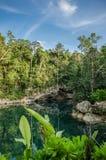 在坎昆的Cenote 库存照片