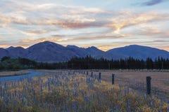 在坎特伯雷小山和农田,新的玉蜀黍属的壮观的日落 免版税库存照片