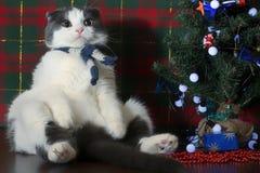 在坐在新年树下的镶边围巾的滑稽的猫 免版税库存照片