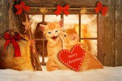 在坐在雪的Fesnter前面的圣诞节的两只猫 库存照片