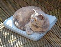 在坐垫的懒惰庭院猫 免版税库存图片