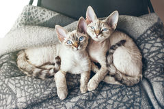 在坐的扶手椅子的两只俏丽的小猫 太阳光火光作用 图库摄影