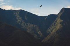 在坚固性山峰上的腾飞的猛禽 库存图片