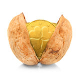 在坚果壳的金黄硬币。 库存照片